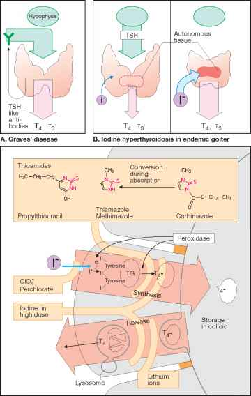 Antithyroid Drugs Action