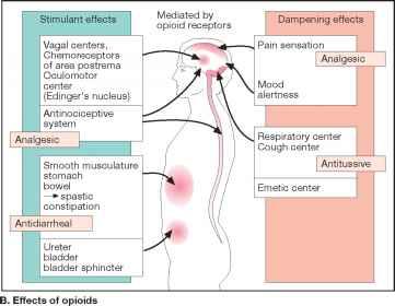 Opioid Analgesics Morphine Type - Adverse Effects