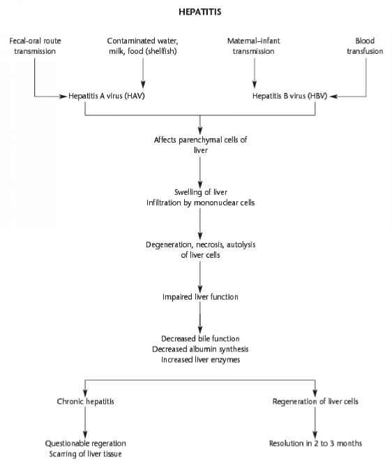 Flowchart Hepatitis