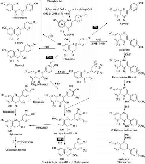 Biosynthesis Anthocyanins