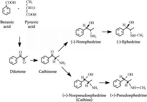 Biosynthesis Of Hypericin - Dietary Supplements