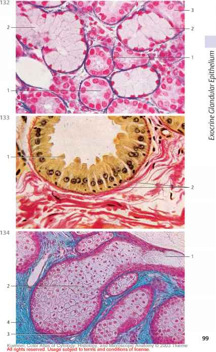 Histology Nervous Tissue