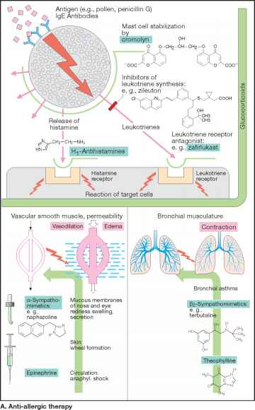 Pathophysiology Tonic Clonic Seizures
