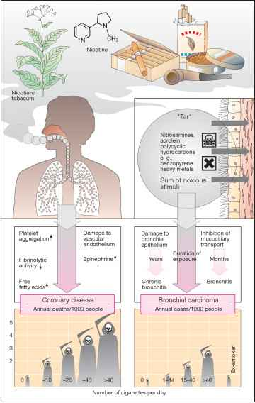 Physical Effects Smoking
