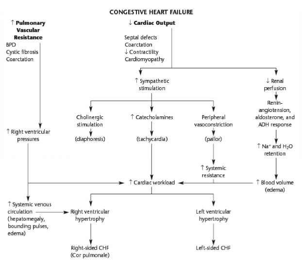 Heart Failure Flowchart