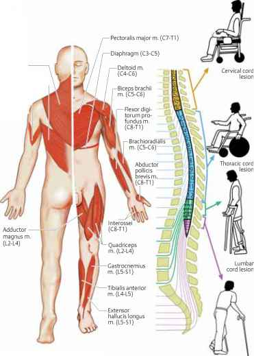 Multiple sclerosis and sexual function