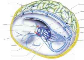 Sinus facial pressure and multiple scelorsis