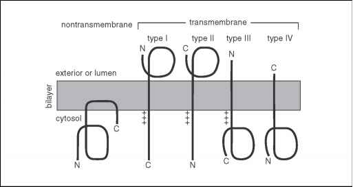 Transmembrane Protein Topology Types